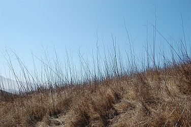 55376-Chino Hills State Park grasses.jpg